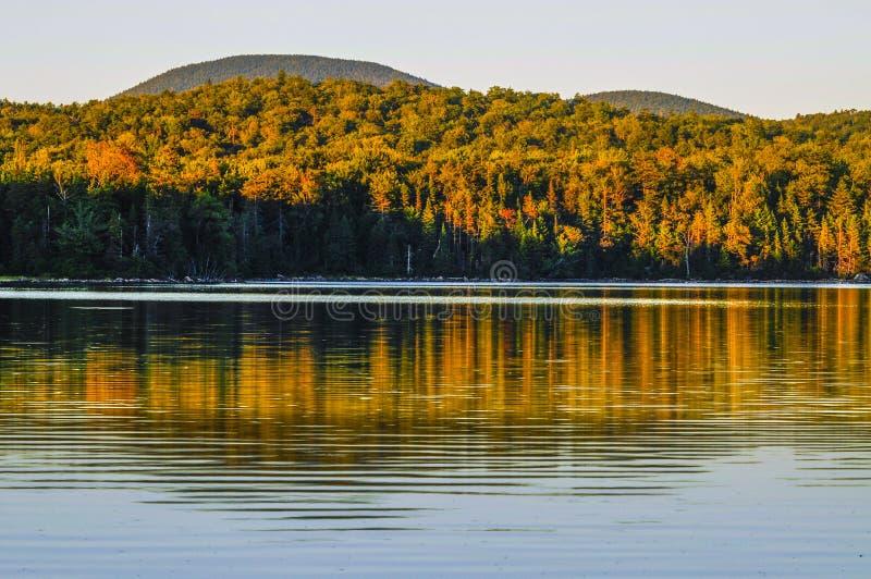 Отражения озера кедр, заповедник леса Adirondack, Нью-Йорк стоковая фотография