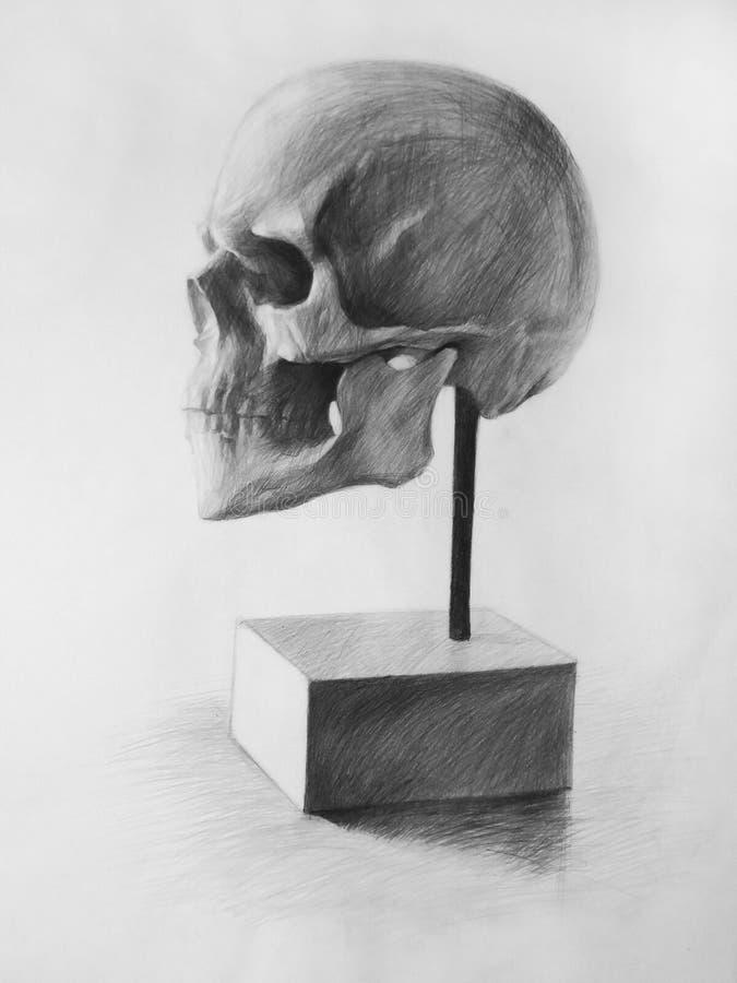 Ołówkowy rysunek Cranium, czaszka, Anatomic rysunek (,) ilustracja wektor