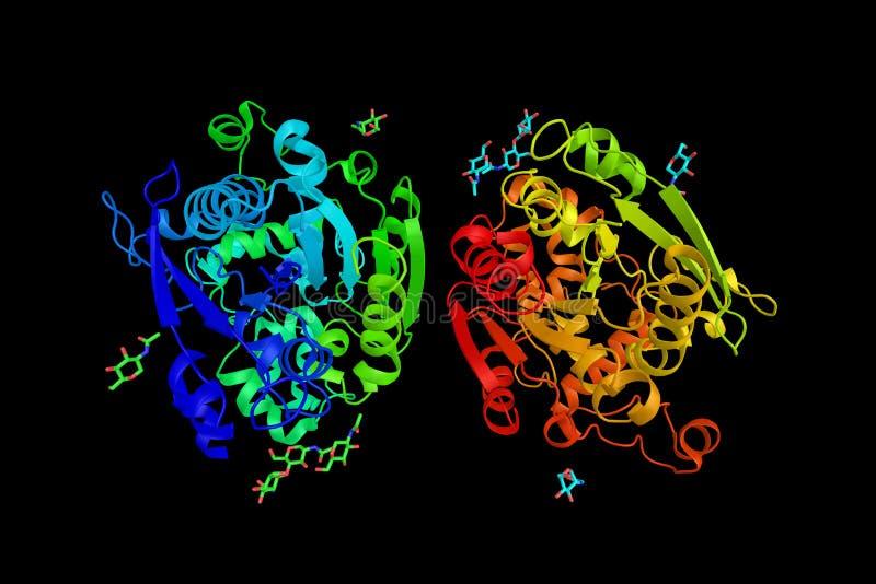 Żołądkowa lipaza, acidic lipaza wydzielona żołądkowym szefem c royalty ilustracja