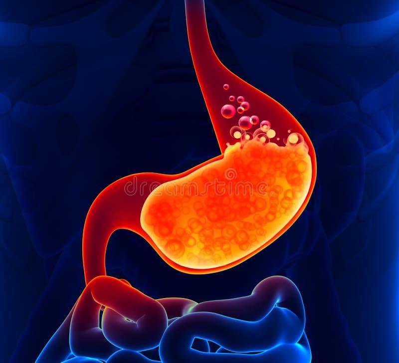 Żołądkowy kwas ilustracja wektor