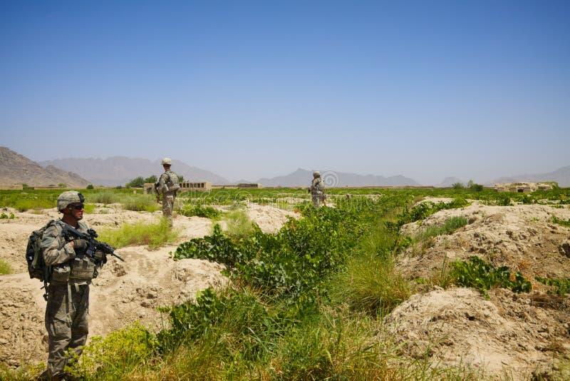 Żołnierze patrolują przez starego gronowego winnicy obrazy royalty free
