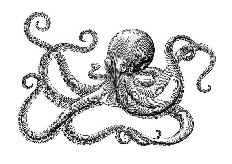 Ośmiornicy ręki rocznika rytownictwa rysunkowa ilustracja na białym bac royalty ilustracja