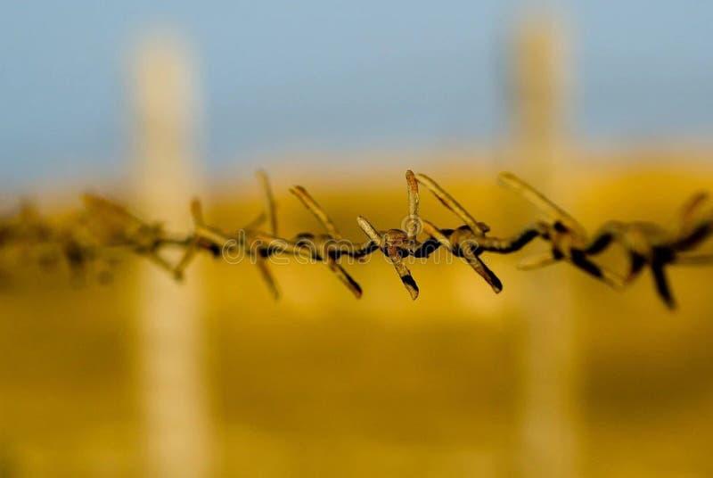 Ośniedziałego drutu kolczastego koloru żółtego Płotowy Ogradza pole zdjęcie royalty free