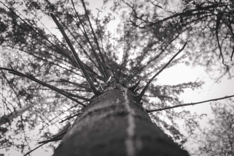 Oświetleniowy Drzewny ślad Drzewny widok od above zdjęcia royalty free