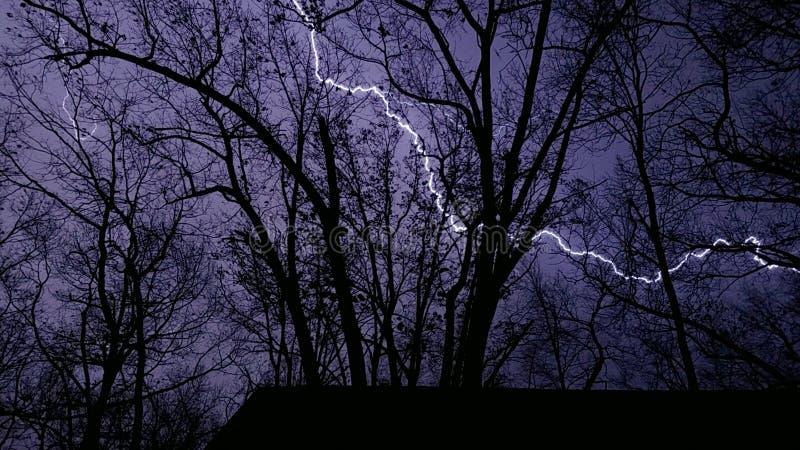 Oświetleniowy rygiel przez drzew zdjęcie royalty free