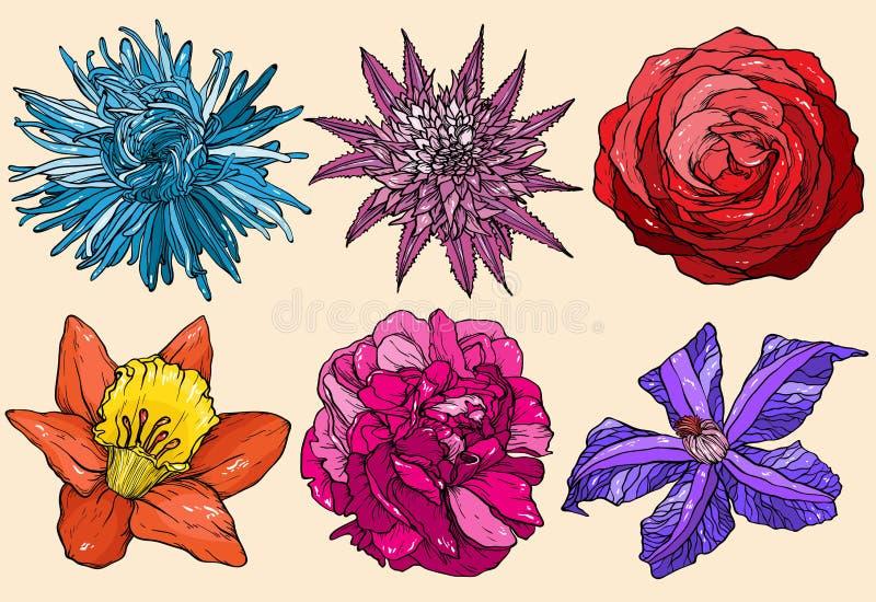 O áster ajustado flores, aumentou, clematite, narciso, escarlate, peônia ilustração stock
