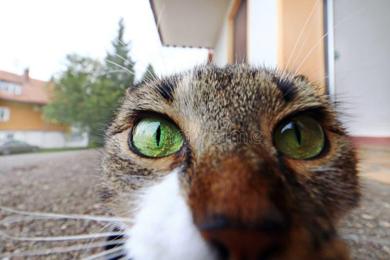 O ângulo largo disparou de uma cara pequena do ` s do gato imagens de stock