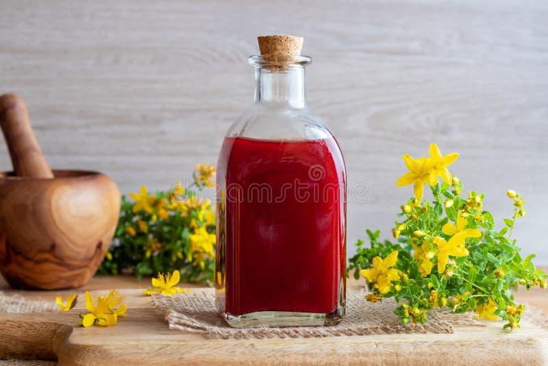 O óleo vermelho feito do wort do ` s de St John floresce fotografia de stock