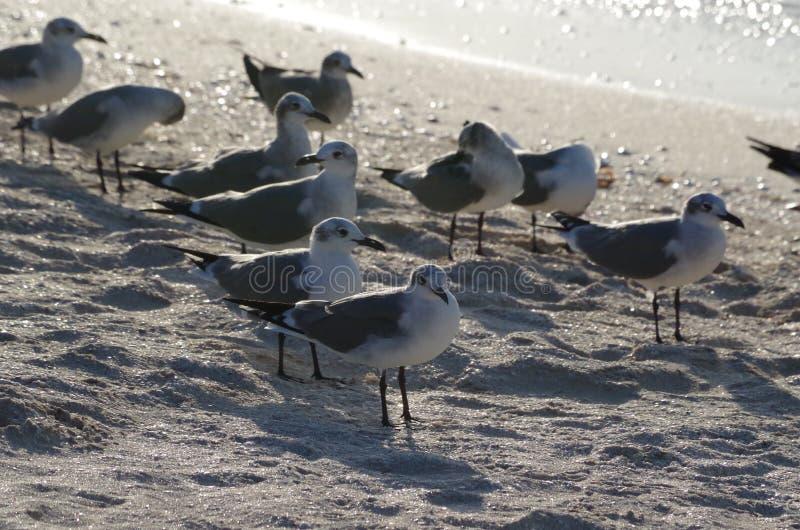 o último sunbath das gaivotas imagens de stock royalty free