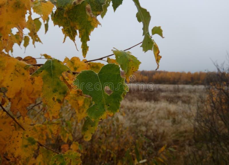 o δασικό τοπίο γκρίζοι ουρανός και δέντρα με το κίτρινο φύλλο και κανένα φύλλο Ορίζοντας φυσικό υπόβαθρο της Ρωσίας στοκ εικόνα