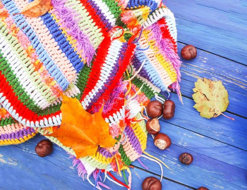 o Κάστανα αλόγων στο πλεγμένο φωτεινό θερμό ριγωτό καρό στοκ εικόνες με δικαίωμα ελεύθερης χρήσης