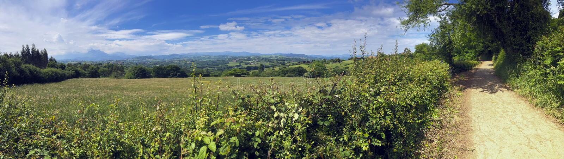 o Сельская панорама с дорогой fra поле около леса в солнечном дне стоковые фотографии rf
