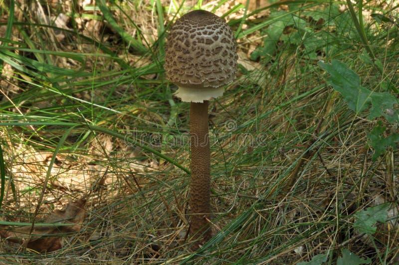 o ?? 对盘的加法 秋天蘑菇采摘 库存照片