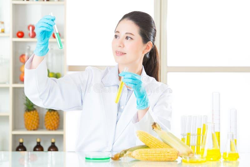 O açúcar de milho genético da alteração não é cana-de-açúcar fotografia de stock