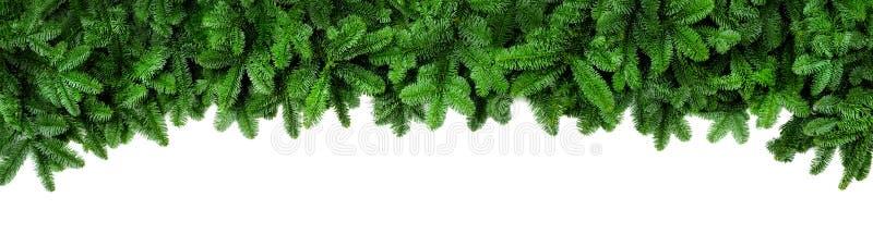 O abeto verde fresco ramifica, beira larga do Natal foto de stock royalty free