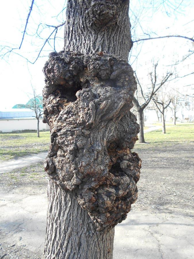 O acúmulo da casca em um tronco de árvore imagem de stock