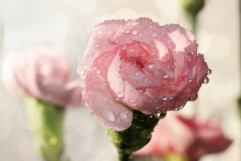 , o aconchego de uma casa nova da vila, beleza criou por natureza, uma flor isolada fotografia de stock