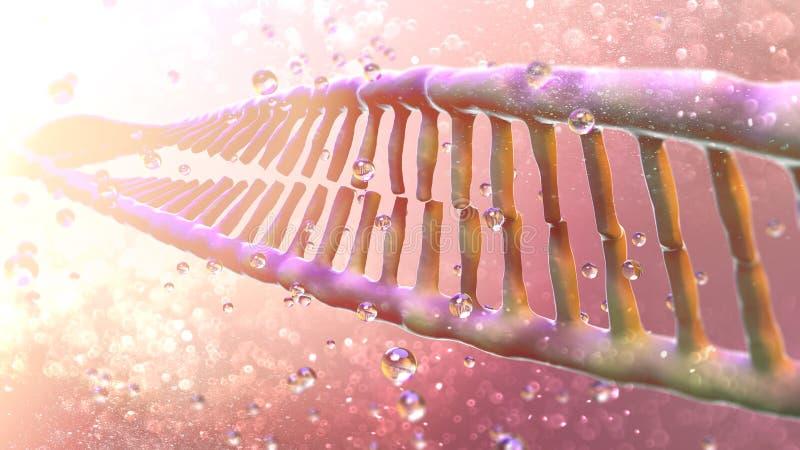 O ADN, ácido Deoxyribonucleic é a linha-como a corrente dos nucleotides que levam as instruções genéticas usadas no crescimento,  ilustração royalty free