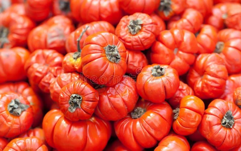 O aethopicum vermelho do Solanum do tomate do alimento etíope, vegetais tropicais da zombaria de África colhe o fundo Folhas verd imagens de stock royalty free