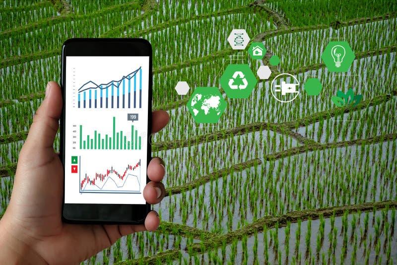 O agrônomo Using do homem do conceito da tecnologia da agricultura uma tabuleta em um campo da agricultura leu uma agricultura do fotos de stock royalty free