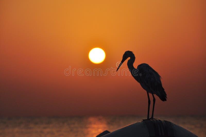 O ajuste do sol sobre o horizonte do mar que joga nas ondas do mar e do pássaro que sentam-se no barco fotografia de stock royalty free