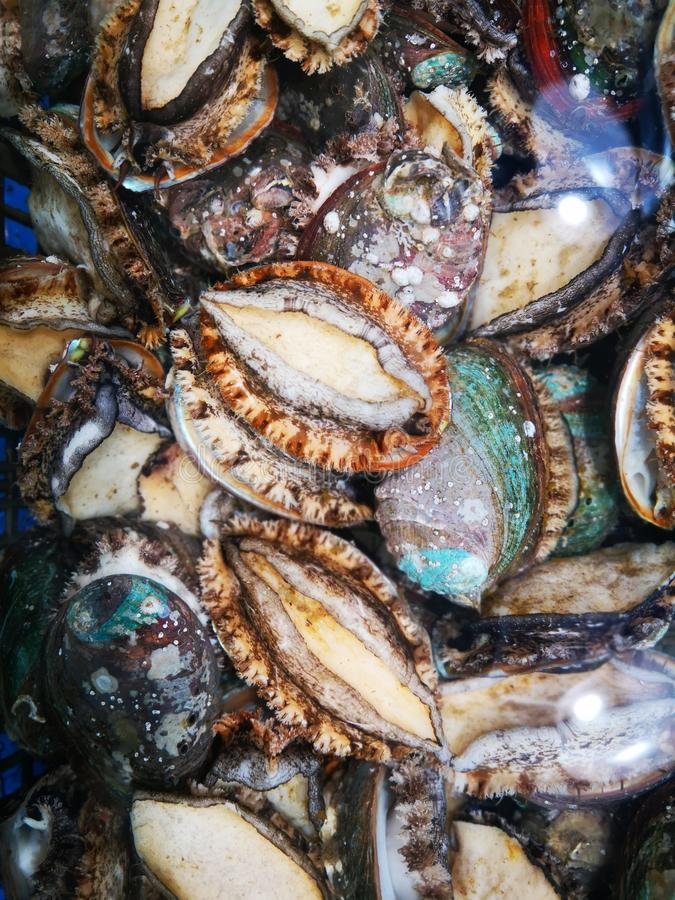 O alimento de mar que aglomera-se junto imagem de stock royalty free