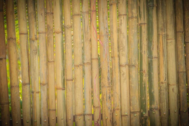O amarelo abstrato secou a textura de bambu da cerca da parede de limite, bambu foto de stock