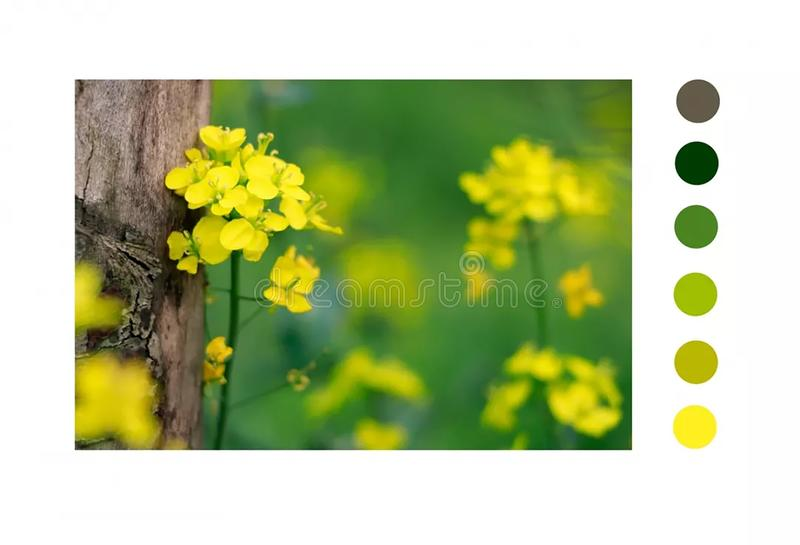 O amarelo consistiu com árvore fotos de stock