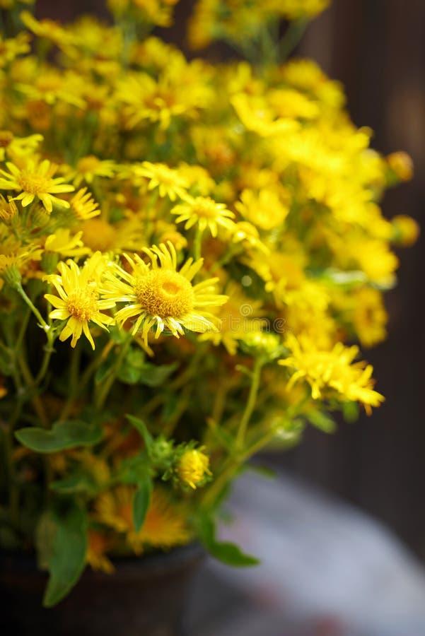 O amarelo do campo do verão floresce em um jarro velho fotos de stock