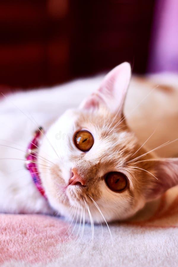 O amarelo eyes o gato fotos de stock