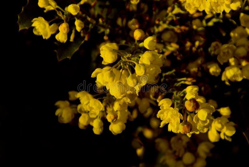 O amarelo floresce #3 fotografia de stock royalty free