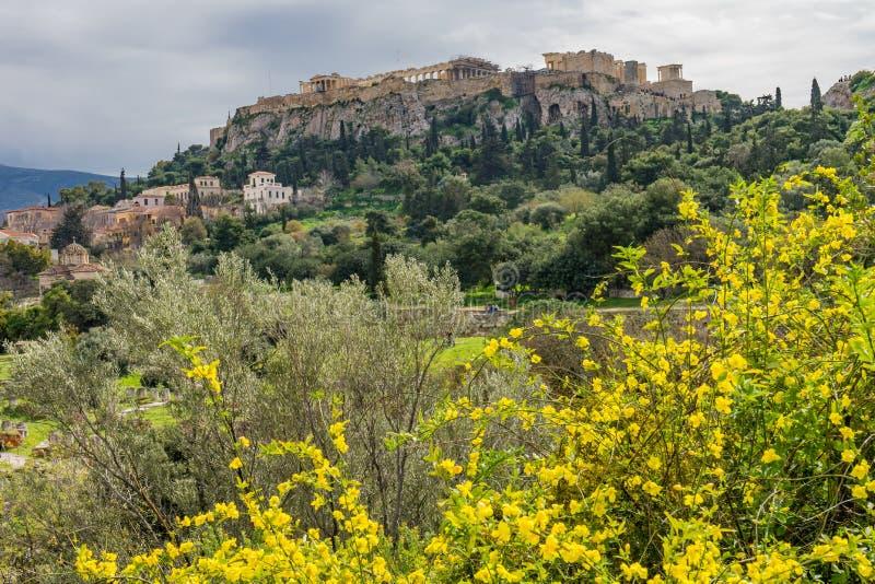 O amarelo floresce a acrópole antiga Atenas Grécia do Partenon da ágora foto de stock