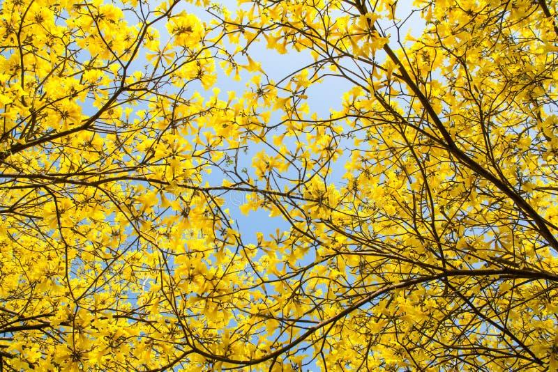 O amarelo floresce o fundo foto de stock royalty free