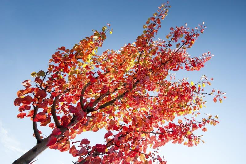 O amarelo misturou as folhas vermelhas em ramos fotografia de stock royalty free