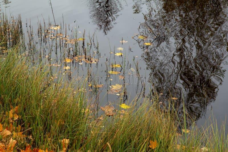 O amarelo sae na água no tempo nebuloso fotos de stock