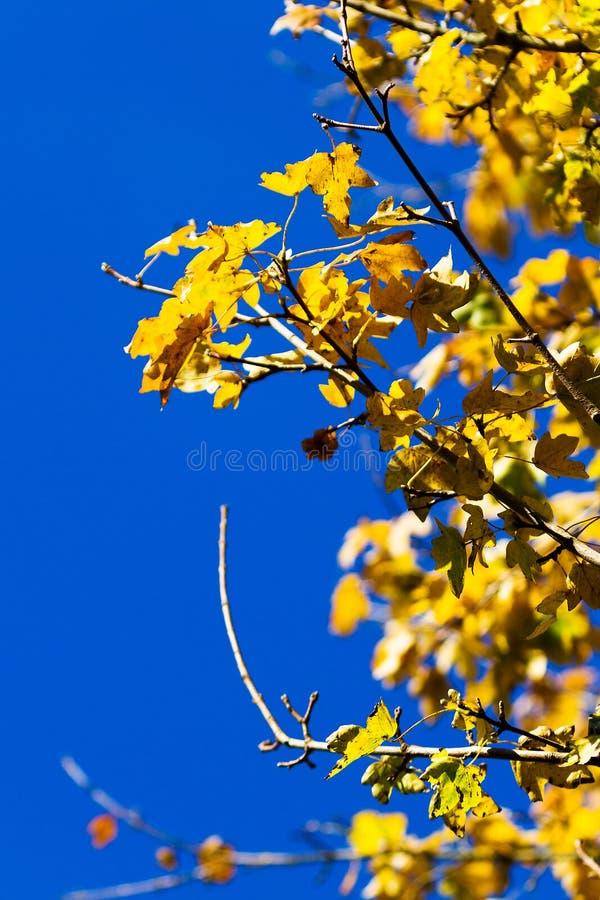 Amarelo do outono fotos de stock