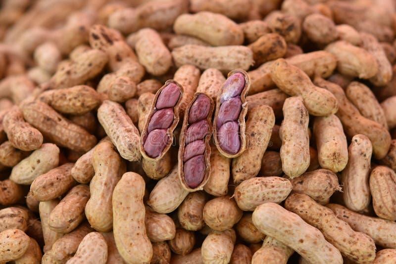 O amendoim fervido fotografia de stock royalty free