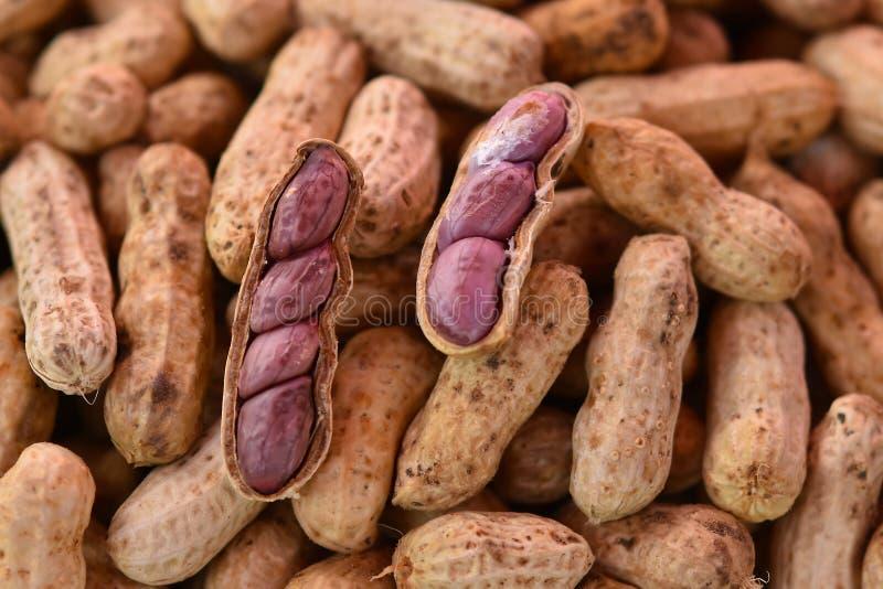 O amendoim fervido fotos de stock royalty free
