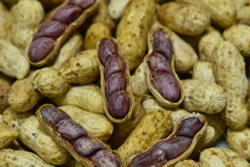 O amendoim fervido fotografia de stock