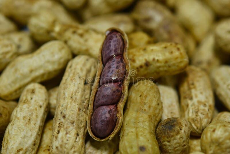 O amendoim fervido imagem de stock