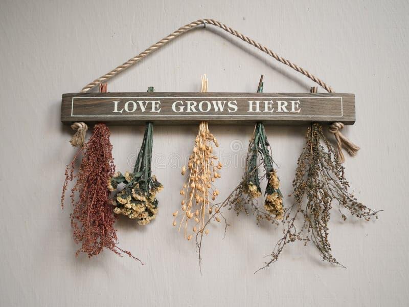 O amor cresce aqui foto de stock royalty free