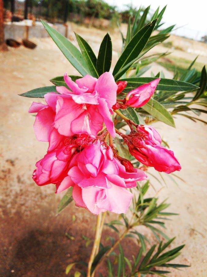O amor da natureza da flora fotografia de stock