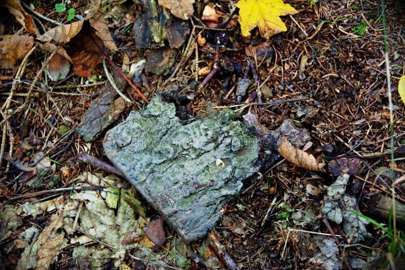 O amor está toda em torno e na floresta! imagem de stock royalty free