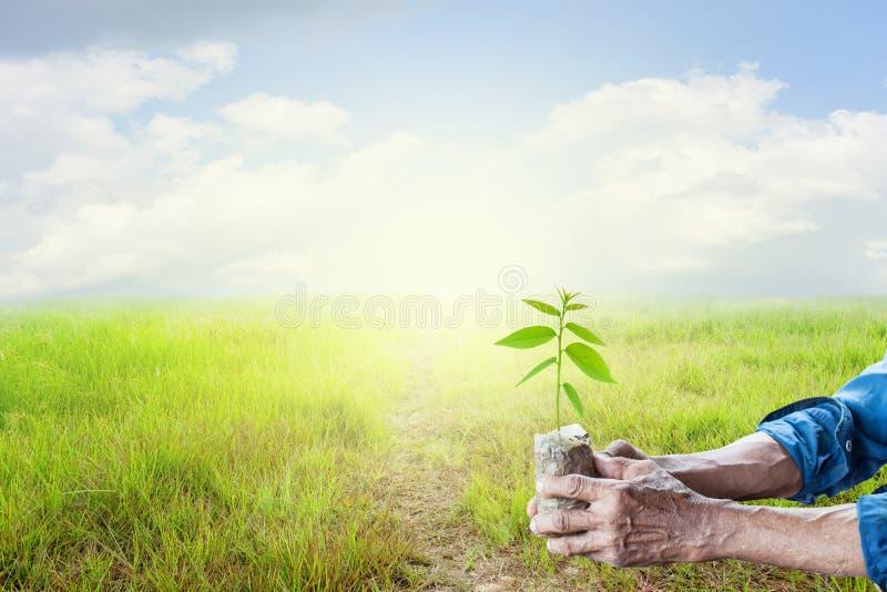 O ancião entrega guardar a planta nova verde com os vagabundos do céu da grama verde foto de stock royalty free