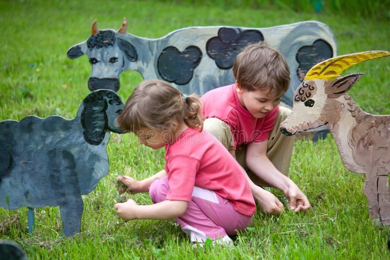 O anf da menina os sheeps e a vaca de madeira da alimentação do menino foto de stock royalty free