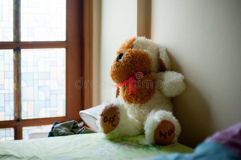 O animal abafado do cão está na cama Esta boneca está um presente de sua pessoa adorável fotos de stock