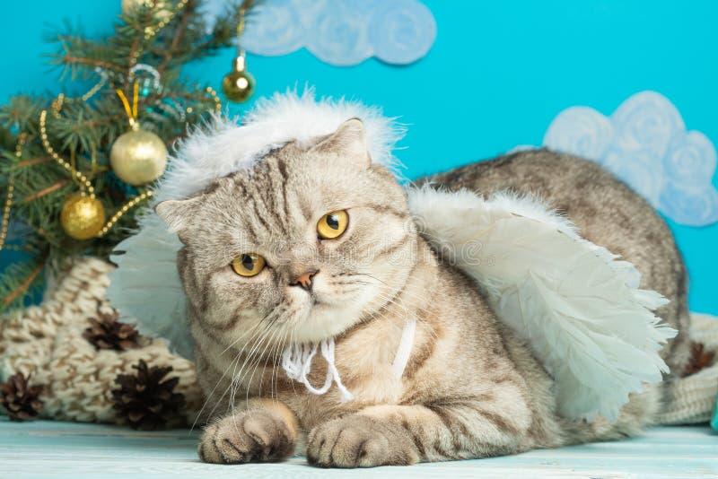 O anjo do Natal é um gato bonito, com as asas no fundo de uma árvore de Natal decorada Ano novo e Natal feliz foto de stock royalty free