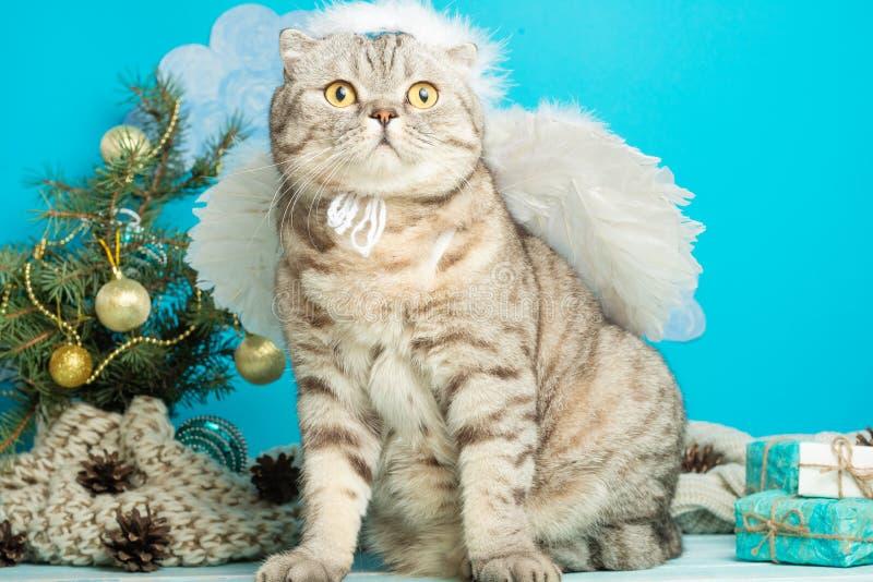 O anjo do Natal é um gato bonito, com as asas no fundo de uma árvore de Natal decorada Ano novo e Natal feliz fotos de stock