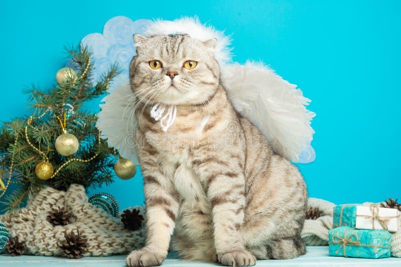 O anjo do Natal é um gato bonito, com as asas no fundo de uma árvore de Natal decorada Ano novo e Natal feliz imagem de stock