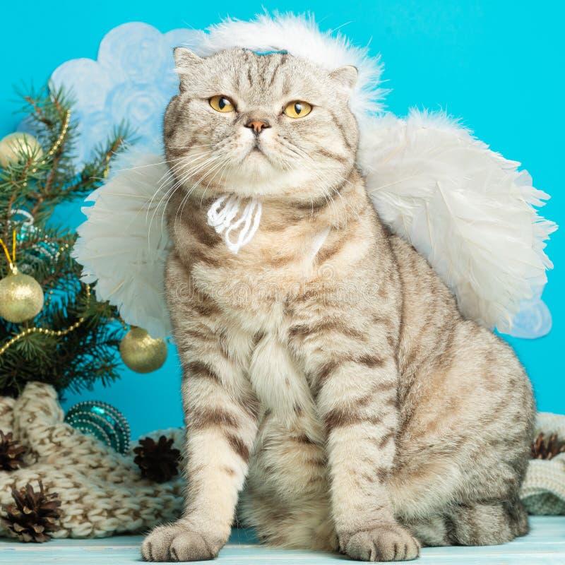 O anjo do Natal é um gato bonito, com as asas no fundo de uma árvore de Natal decorada Ano novo e Natal feliz fotografia de stock royalty free